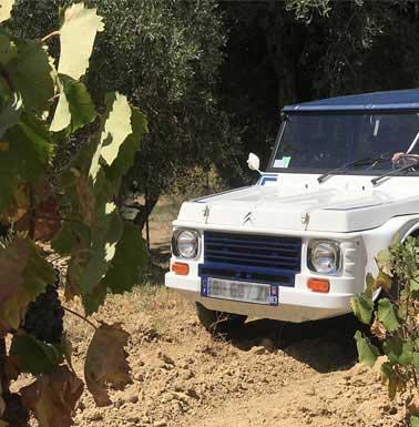 mehari provence wine adventure excursion oenologique bandol oenotourisme