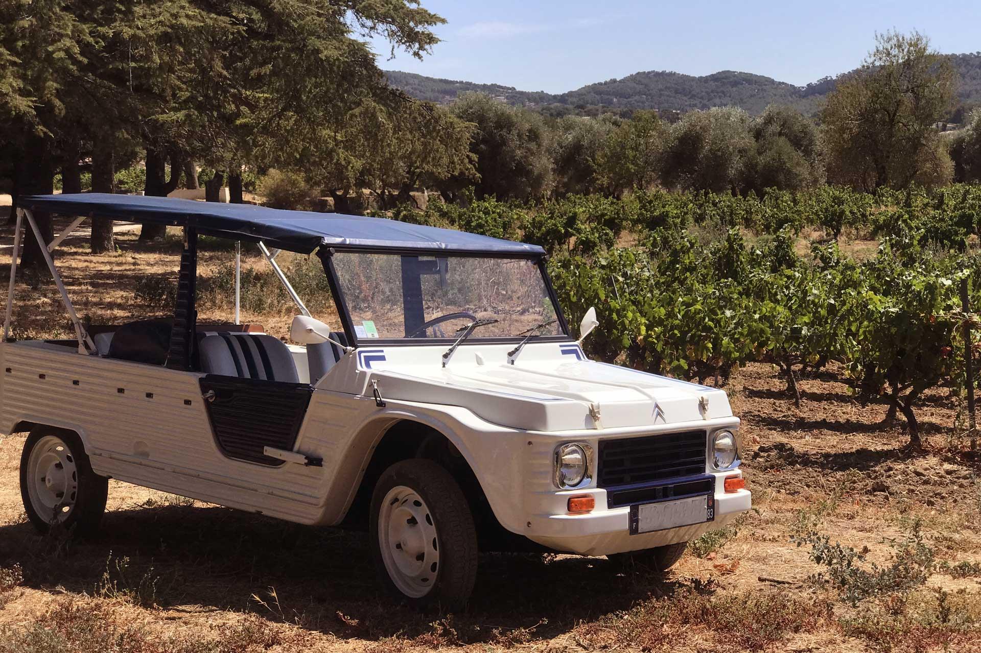 provence wine adventure oenotourisme Bandol