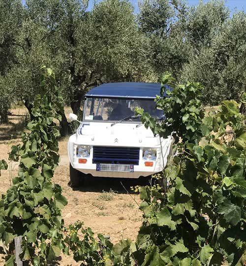 provence wine adventure galerie
